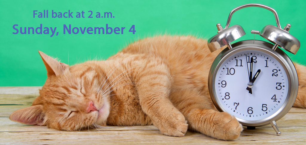 Cat sleeping with alarm clock and reminder to set clocks back