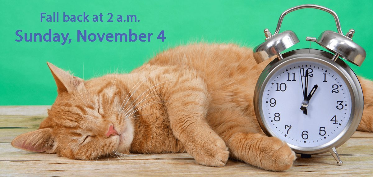 Time to Turn the Clocks Back | Sleeping cat with old-fashioned alarm clock