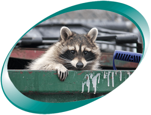 Utility Expense Management Services | Raccoon Peering out of Dumpster | Cost Control Associates