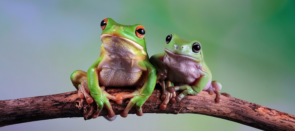 Leap Day Facts | Two frogs sitting on a branch | Cost Control Associates